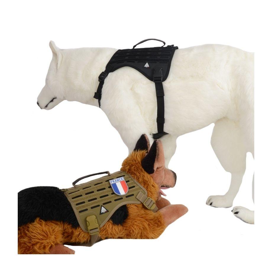 DRAKKEN Coyote