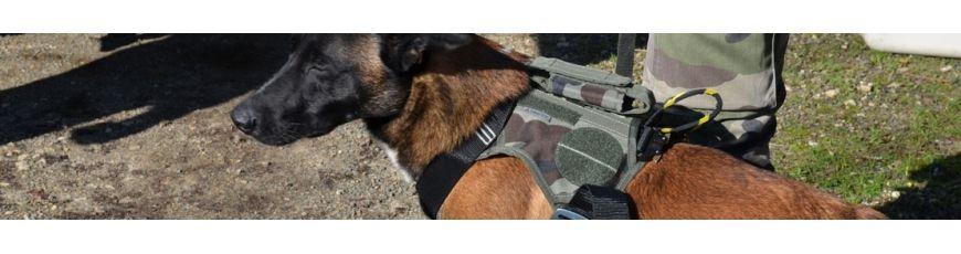 Dog gears